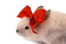 Free A Rabbit Royalty Free Stock Photography - 4085187