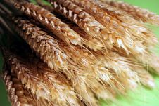 Free Golden Grain Stock Images - 4085304