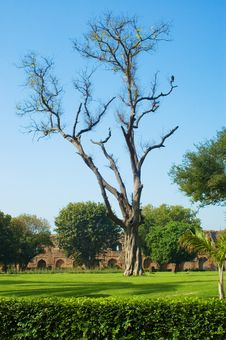 Old Tree In Old Fort Lawn