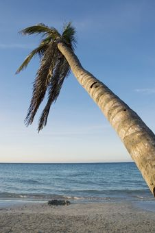 Free Tropical Beach Stock Image - 4086551