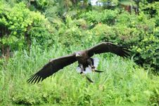 Free Eagle In Flight Stock Images - 4086614