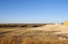 Cattle Stockyard Royalty Free Stock Images