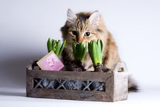 Free Cat Is Sneaking Behind The Flower Royalty Free Stock Photography - 4087177