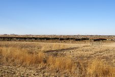 Cattle Stockyard Stock Image