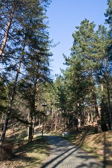 Free Pine Trees Path Stock Images - 4088004