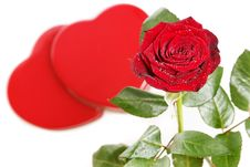 Free Red Rose With Hearts Stock Photo - 4088080