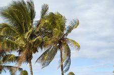 Free Coconuts Palms On Tropical Sky Stock Photos - 4088443