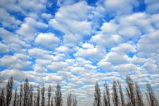 Free Cloudscape With Line Of Trees Royalty Free Stock Images - 4088729