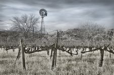 Vineyard And Windmill In Infrared Royalty Free Stock Photos