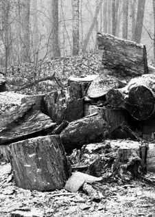 Free Snow On Woodpile Stock Photos - 4088913