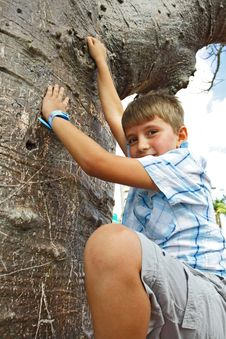 Free Boy Climbing A Tree Royalty Free Stock Photography - 4089247