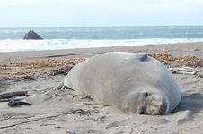 Free Sea Lion Royalty Free Stock Image - 4089296