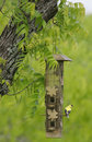 Free Yellow Bird Sitting On A Feeder Royalty Free Stock Photos - 4090598