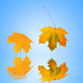 Free Falling Leaves Royalty Free Stock Photo - 4097025