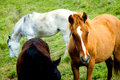 Free Horses In Meadow Royalty Free Stock Images - 4097139