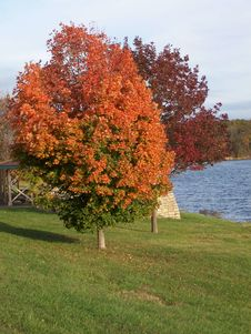 Autumn Lake Stock Photos