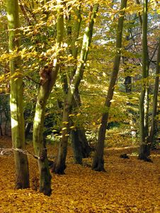Free Autumn Forest Stock Photography - 4090402