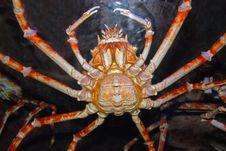 Free Spider Crab Inside The Aquarium Stock Image - 4090521