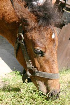 Feeding Horse Royalty Free Stock Photography