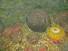 Free Sea Life In Aquarium Stock Photo - 4091010