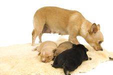 Free Dogs Family. Stock Images - 4094674