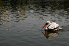 Free Bird Royalty Free Stock Photos - 4094938