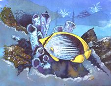 Free Butterflyfish Stock Photos - 4095143
