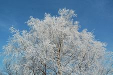 Free Snow Covered Tree Stock Image - 4096821