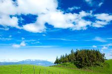 Beautiful Meadow And Small Woods Royalty Free Stock Images