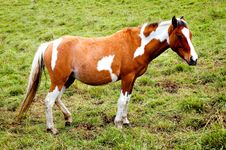 Free Beautiful Horse In Meadow Stock Photos - 4097113