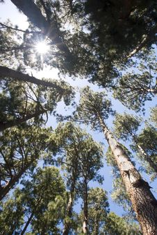 Looking Up At The Forest Canopy Stock Photo