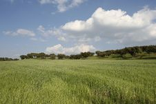 Free Landscape With A Green Field Royalty Free Stock Images - 4098079
