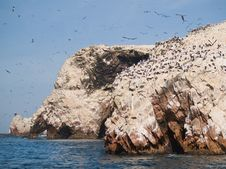Wildlife On Islas Ballestas In Peru Royalty Free Stock Photo