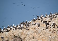 Free Wildlife On Islas Ballestas In Peru Stock Photo - 4098140