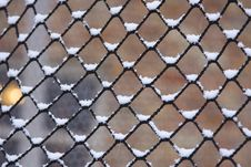 Free Snow On Netting Stock Photos - 4098313