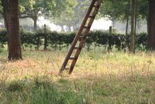 Free Ladder In The Field Stock Image - 4099521