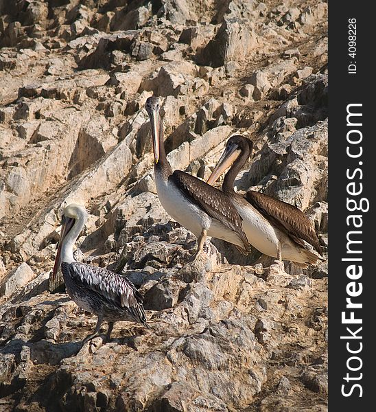 Wildlife on Islas Ballestas in Peru