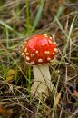 Free Toadstool Stock Photography - 415662