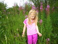 Free Walking In The Fireweeds Royalty Free Stock Photos - 418018