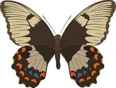 Free Papilio Aegeus Royalty Free Stock Images - 410429