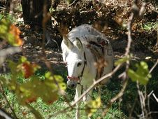Free Donkey In Wood Stock Photos - 411003