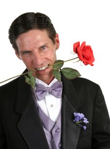 Free Tux & Rose Stock Photography - 413042