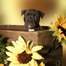 Free Puppy In A Box Stock Images - 413864