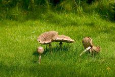 Free Mushrooms 2 Stock Image - 414591