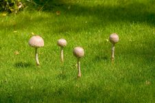 Free Mushrooms 1 Stock Photography - 414592
