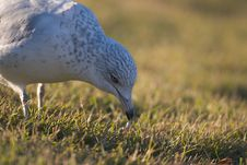 Feeding Seagull Royalty Free Stock Photos