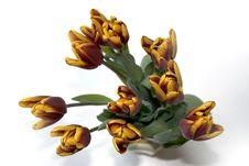 Free Tulips Royalty Free Stock Photos - 415918