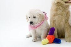 Free Puppy Royalty Free Stock Photos - 416738