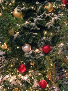 Free Christmas Evergreens Stock Photography - 417422
