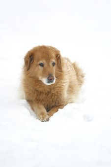 Free Snow Dog Stock Photography - 419212